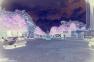 FINEART - nr003_1999aaau08 © LEVENT ŞEN