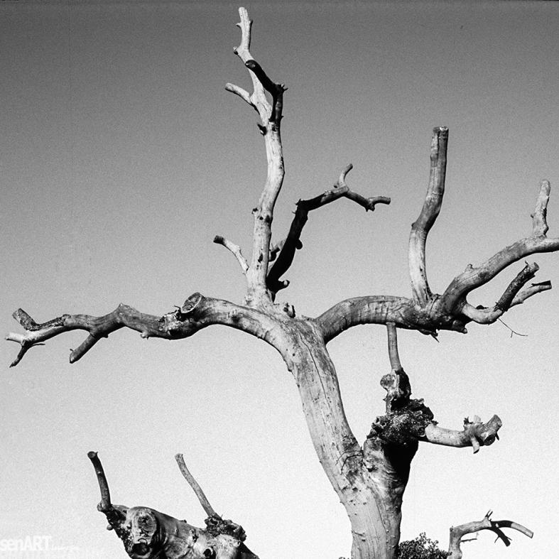 FINEART - pr2006aacs0112 © LEVENT ŞEN