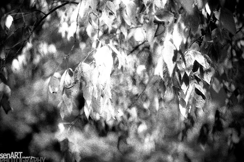 FINEART - pr2014aadz_16 © LEVENT ŞEN
