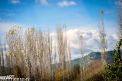 2016yds_sen6061 © LEVENT ŞEN