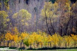 2016yds_sen6142 © LEVENT ŞEN