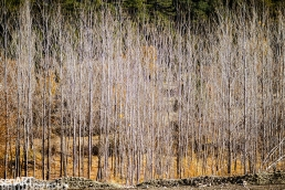 2016yds_sen6151 © LEVENT ŞEN