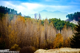 2016yds_sen6158 © LEVENT ŞEN