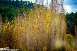 2016yds_sen6160 © LEVENT ŞEN