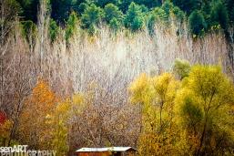 2016yds_sen6161 © LEVENT ŞEN