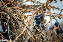 2016yds_sen6202 © LEVENT ŞEN
