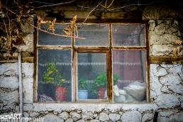 2016yds_sen6223 © LEVENT ŞEN