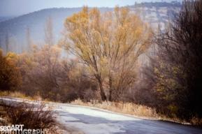 2016yds_sen6266 © LEVENT ŞEN