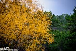 2016yds_sen6328 © LEVENT ŞEN