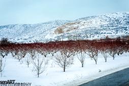 2016yds_sen6967 © LEVENT ŞEN