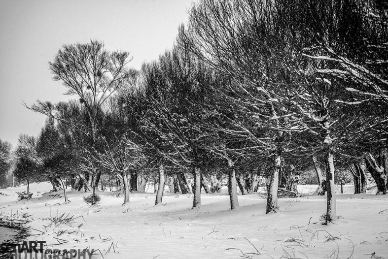 2016yds_sen7153 © LEVENT ŞEN