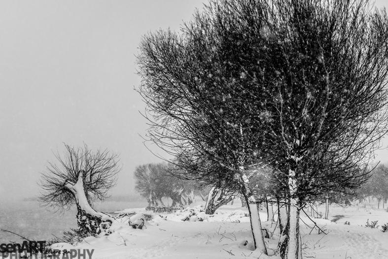 2016yds_sen7160 © LEVENT ŞEN