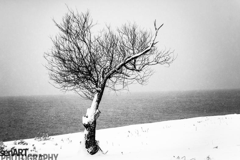 2016yds_sen7185 © LEVENT ŞEN