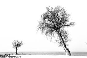 2016yds_sen7188 © LEVENT ŞEN