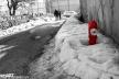 2017yds_sen_7932 © LEVENT ŞEN