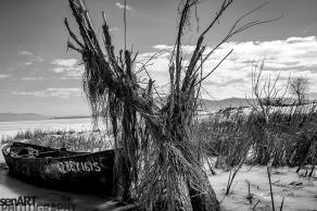 2017yds_sen_8033 © LEVENT ŞEN